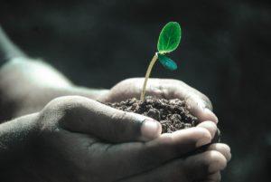 משלוחי צמחים ראשית